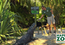 Wild Fun from Apes to Zebras at the Naples Zoo!
