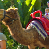Camel Rides at the Naples Zoo
