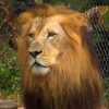 Video Tour of Naples Zoo at Caribbean Gardens