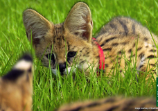 90 Seconds of Cuteness, brought to you by the Naples Zoo & SWFL-TV