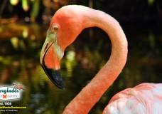 See 40 Alligators & Flamingos at Everglades Wonder Gardens