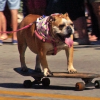 "2015 ""Pets on Third"" Pet Parade in Naples"