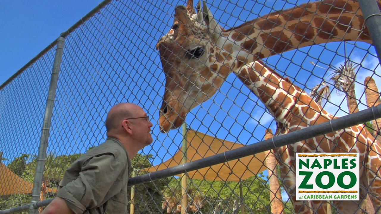 Tim-Giraffe-Thumb