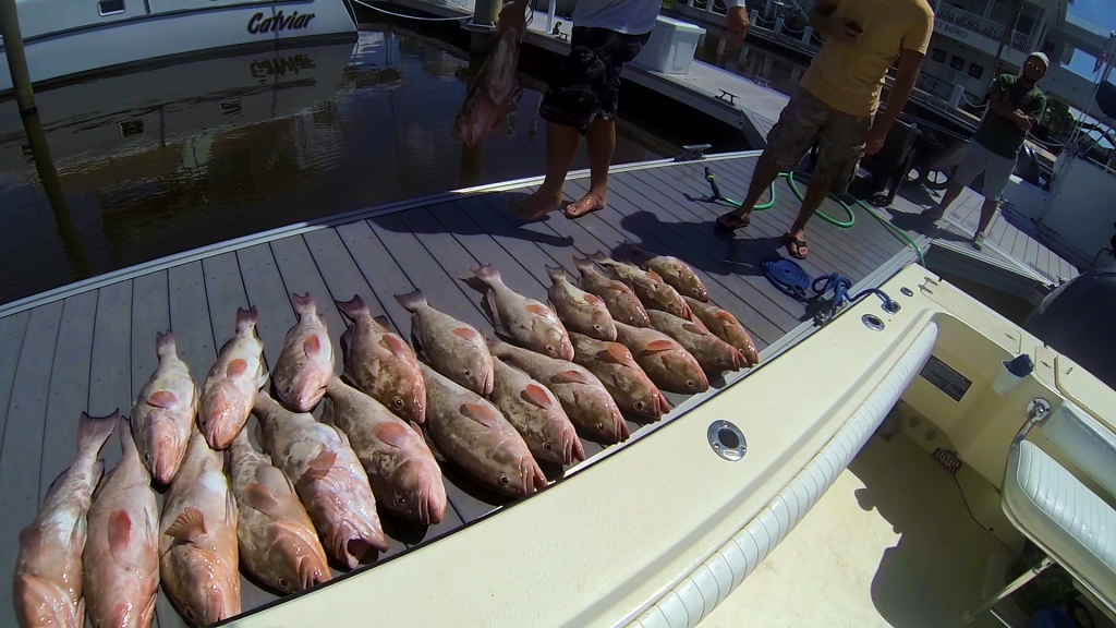 island fever fishing charters fort myers beach fl