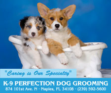 K-9 Perfection Dog Grooming