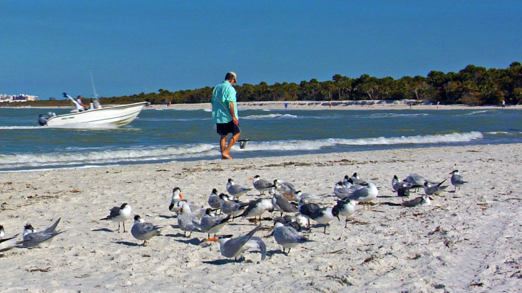 Seagulls at Delnor-Wiggins Pass State Park in Naples, FL