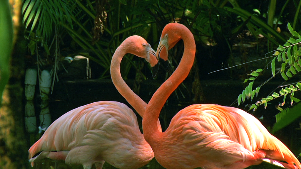 flamingos heart stance position
