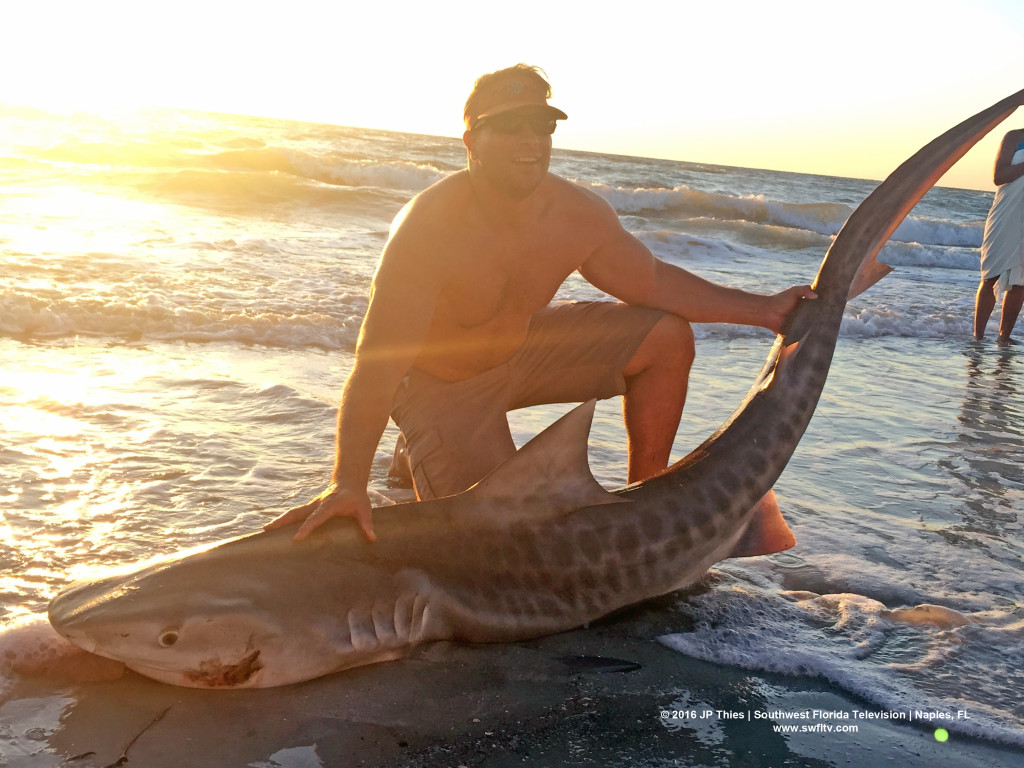 Josh Lake with 6' Tiger Shark in Naples, FL