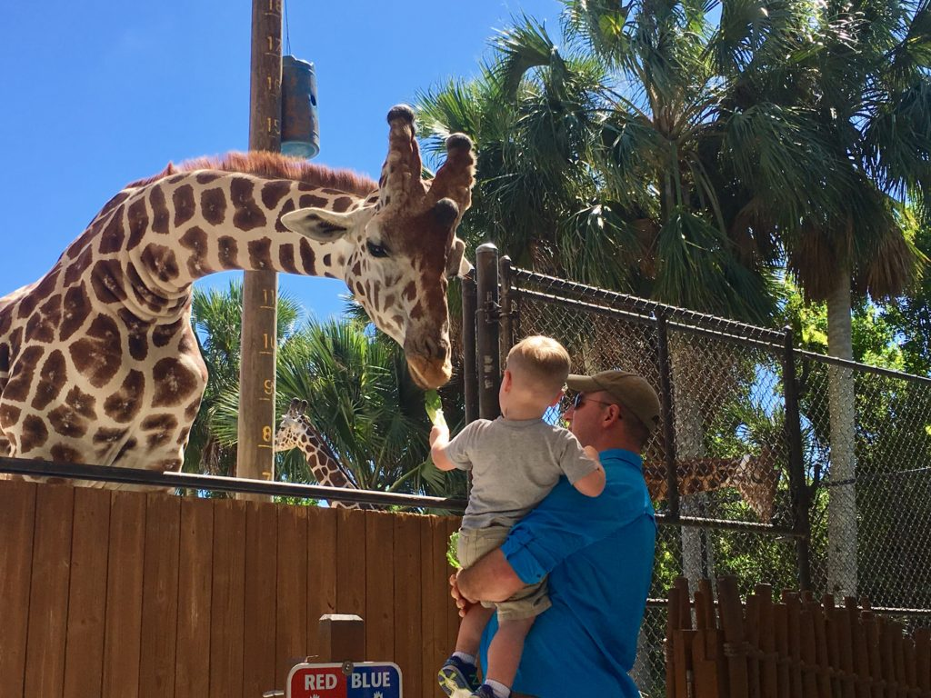 hand-fee the giraffe at the Naples Zoo